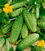 Cucumber Seeds, Boston Pickling, Non-Gmo Heirloom Seeds, Best for Pickle... - $10.69
