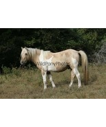 Chincoteague Stallion Prince of Tides Photo - Pick One Image - Various S... - $7.50+