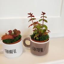 Succulents in Espresso Mug Planters, Set of 3, ceramic Thankful Grateful Blessed image 5