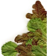 Lettuce Mixed Greens Gourmet Non GMO Heirloom Vegetable Seeds Sow No GMO... - $2.86+