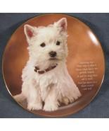 Adoring Eyes Collector Plate From Beloved Westies Danbury Mint Bradex 22... - $79.97