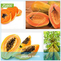30 Pcs Yellow Gold Papaya Heirloom Seeds Delicious Bonsai Unique Very RA... - $4.76