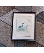 Pair Joel Kirk Prints, Sea Duck, Kinglet, Elder, Flycatcher - $18.69