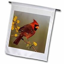 3dRose fl_84562_1 Northern Cardinal Bird, Lake Corpus Christi Texas-NA02... - $21.75