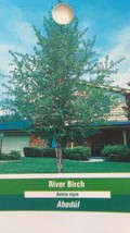 River Birch Tree 4-6 FT Live Healthy Trees Home Plant Landscape Garden Plants  - $96.95