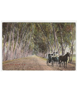 Lovers Lane Horse & Buggy Roswell New Mexico 1910 postcard - $6.93