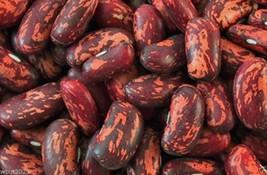 100 Spanish Tolosana Bean Seeds a.K.a ,Prince bean,Phaseolus vulgaris-bu... - $3.42