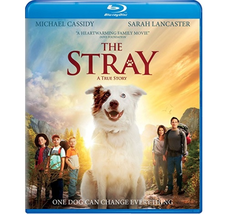 The Stray [Blu-ray+DVD] (2017)