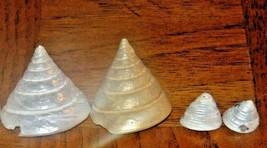 Vintage 4 Pearl Trochs Nilotious Seashells Bought n Florida 1983-Photo Prop - $4.50