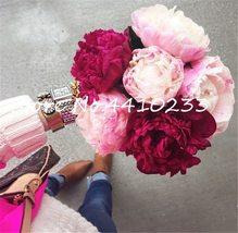 5 Pcs Big Flower Peony Chinese Bonsai Colorful Mix Color Peony Perennial... - $1.35