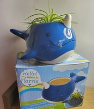 """Live Air Plant in Whale Animal Planter, 5"""" blue glazed ceramic pot, Narwhale image 4"""
