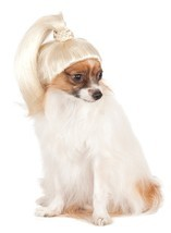 Pet Wig Blonde Ponytail Small/Medium Costumes Dog Supplies - €7,81 EUR
