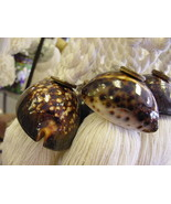 4 South Pacific Art Brown Snake Head Cowry Indo-pacific Seashell Decor Tassels - €35,11 EUR