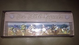 """Grasslands Road Sea Shell Magnets """"By the Sea"""" Collection/6 Glass Sea Sh... - $19.80"""
