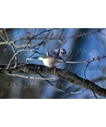 Digital photo picture bird blue jay wallpaper stock photo background jpg screen - $0.99