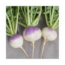 500 Purple Top White Globe Turnip seed New seed Non-GMO Heirloom - $10.00