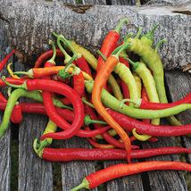 50 seeds Sweet Pepper Corbaci - Turkish Heirloom Seeds - $10.00