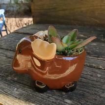 "Kalanchoe Succulent in Ceramic Moose Planter, 5"" Brown, Animal Pot, Deer Elk"