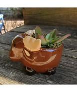 "Kalanchoe Succulent in Ceramic Moose Planter, 5"" Brown, Animal Pot, Deer... - $16.99"