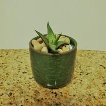 "Haworthia Succulent in Ceramic Green Crackle Planter, 2"", with River Rocks"