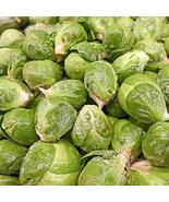 Long Island Brussels Sprouts Seeds 1000 Seeds Round, Dark Green Sprouts ... - $43.56