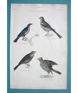 BIRDS Tanager Chaffinch Ortolan Skylark - 1860 COLOR  Antique Print - $12.60