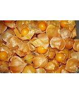 100 Aunt Molly's Tomatillo Seeds (Ground Cherry) Super Sweet TkPaynean - $79.20