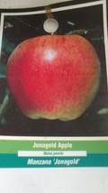 JONAGOLD APPLE 4-6 FT Fruit Tree Plants Live Trees Plant Juicy Sweet Apples - $96.95
