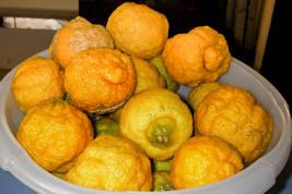 5 African Rough Lemon Tree Seeds-1361 - $3.98