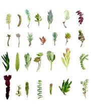 "28 Assorted Succulent Cuttings/ 28 Varieties/ 3""-6"" Organic Succulents F... - $23.71"