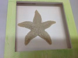 NEW Green and Brown Resin Starfish Shadow Box image 2