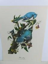 Blue Jay (Cyanocitta Cristata) Bird 9x12 Frameable Print Nature Birds - $11.75