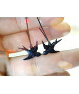 Black Sparrow Earrings Bird Earrings Black Swallow Earrings Black Bird E... - $25.00