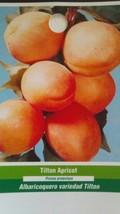 Tilton Apricot 5 Gal Tree Plants Fruit Trees Plant Juicy Sweet Apricot Now - $98.95