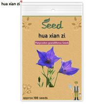 100 Pcs Platycodon Grandiflorus Bonsai SEED, HZ Decorative Flower Plant - $7.13