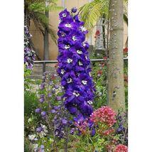500 Purple Rocket Larkspur Delphinium Flower Seeds #LCY05 - $20.17