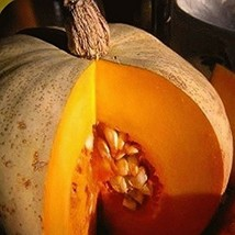 Sweet Meat Squash Seeds - A tasty 12–15 lb slate-grey heirloom squash!!!! - $2.54+