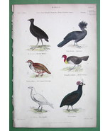 BIRDS Turkey Partridge Sheathbill Curassow - H/C Color Antique Print - $10.71