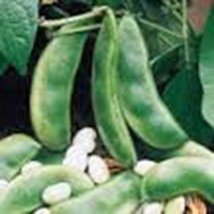 B EAN Seed, Fordhook Lima Bush,Heirloom, Organic 20+ Seeds, Non Gmo, B EAN S - $5.94