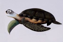 Sea Turtle hand sculptured painted from large Palm Tree Frond, tortoise ... - £60.96 GBP