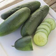 Raider F1 Cucumber Seeds (20 Seed Pack) - $2.93