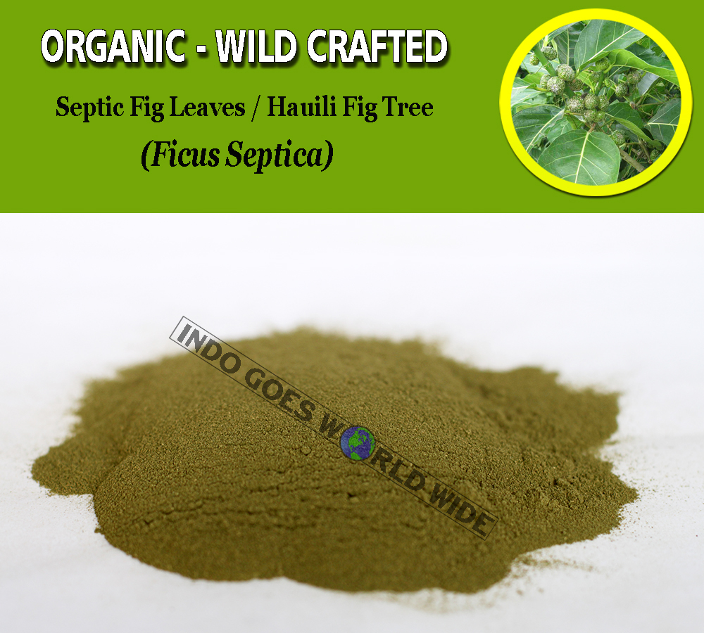 POWDER Septic Fig Leaves Hauili Fig Tree Ficus Septica Organic WildCrafted Herbs