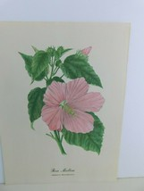 VTG Rose Mallow (Hibiscus Moscheutos)  9x12 Frameable Print Nature Flower - $11.75