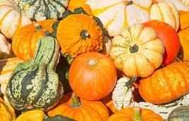 Gourd Small Mixed Non GMO Heirloom Garden Vegetable Seeds Sow No GMO® USA - $3.85+