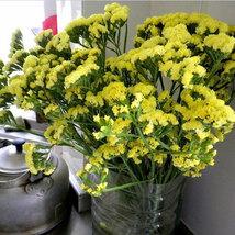 Yellow Forget Me Not Flower 35 seeds pot flowers home garden bonsai flower seeds - $13.05