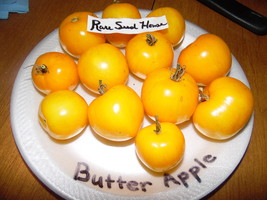 Rare Butter Apple Tomato! 10 Seeds! Over 200 kinds of tomatoes in our store - $15.48