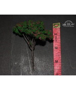 Tree Violet flowers tall is 3.5 inches for building diorama 1:35 Pro Bui... - $5.45