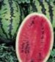 Watermelon - Allsweet - Non-Hybrid - Non-GMO - St. Clare Heirloom Seeds - $2.25