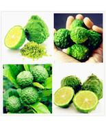 30 Thai Kaffir Lime Seeds, Organic, Fresh,Grow your own leaves, CITRUS H... - $3.50