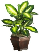 Nearly Natural 6592-05 Golden Dieffenbachia with Wood Vase Decorative Si... - $37.15